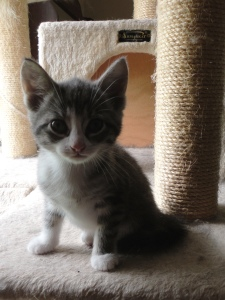 Little Chloe, 8 weeks old.